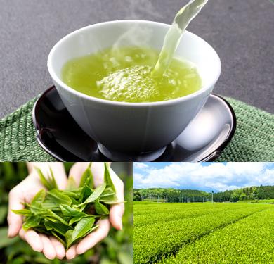 地元静岡産の「お茶」